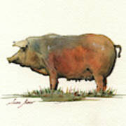 Black Iberian Pig Art Print