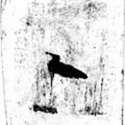 Black Ivory Actual 1b23z Art Print