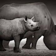 Black Rhinoceros Baby And Cow Art Print