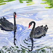 Black Swans - Soulmate Art Print