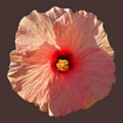 Blooming Hot Art Print