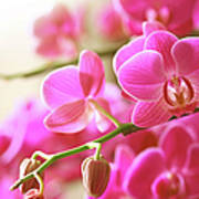 Blooming Pink Orchid On A Green Branch Art Print