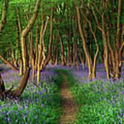 Bluebells In Sussex Art Print