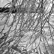 Branches Of Tree Bending Under Weight Of Art Print