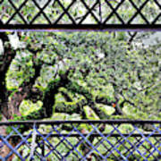 Bridge Through Live Oaks Art Print