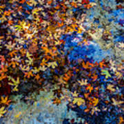 Bright Beautiful Fall Foliage Floating Art Print