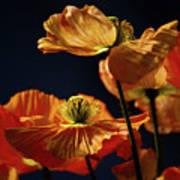 Bright Orange Poppies Art Print