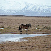 Brown Icelandic Horse In Profile Near Stream Art Print
