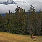 Bull Elk In Meadow With Snow Covered Art Print