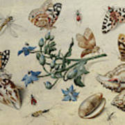 Butterflies, Clams, Insects Art Print