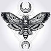 Butterfly - Vector Art Print