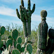 Cactus Twins Have Company Art Print