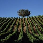 Californias Winegrape Growing Region Of Art Print