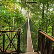 Canopy Walkway. Taman Negara National Art Print