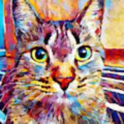 Cat 13 Art Print