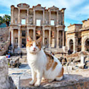 Cat In Front Of The Library Of Celsus Art Print