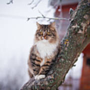 Cat Outdoors In The Winter Is On The Art Print
