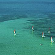 Catamarans, Catseye Bay, Hamilton Art Print