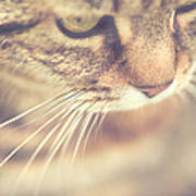 Cats Whiskers Art Print