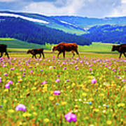 Cattle Walking In Grassland Art Print