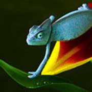 Chameleons Belong To One Of The Best Art Print