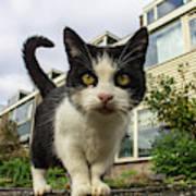 Close Up Cat On The Street Art Print