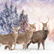 Close Young Deer In Nature. Winter Time Art Print