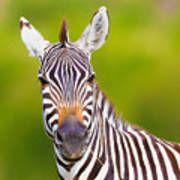 Closeup On Beautiful Zebras Head Art Print