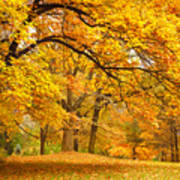 Collection Of Beautiful Colorful Autumn Art Print