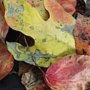 Collective Autumn Color Art Print