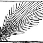Comet Of 684 Halley, 1493 Art Print