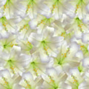 Cotton Seed Lilies Art Print