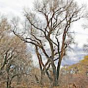Cottonwood Az Bayou Leafless Tree Sky Clouds Path 31262019  Art Print