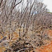Cottonwood Az Bayou Leafless Trees Scrub Water Sand Clouds 3262019_5320 Art Print