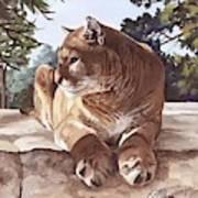 Cougar Outlook Art Print