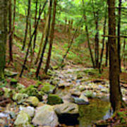 Creek In Massachusetts 2 Art Print