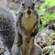 Cute Squirrel Art Print