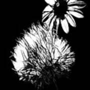 Daisy And Thistle Black And White Art Print