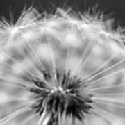 Dandelion Seeds Pod Macro Art Print