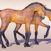 Darling Foal Pair Art Print