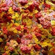 Days Of Autumn 18 Art Print