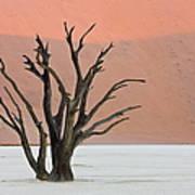 Dead Vlei Sossusvlei Africa Namibia Art Print