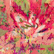 Decomposed Pink Lily  Art Print