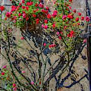 della Rocca Rose Art Print