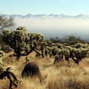 Desert Winter 1 Art Print