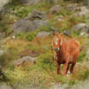 Digital Watercolor Painting Of Stunning Image Of Wild Pony In Sn Art Print