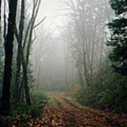 Dirt Road Leading Through Foggy Forest Art Print