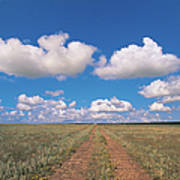 Dirt Road On Prairie With Cumulus Sky Art Print