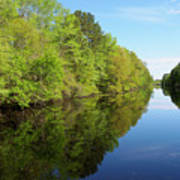 Dismal Swamp Canal In Spring Art Print