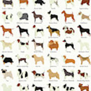 Dog Breeds Art Print